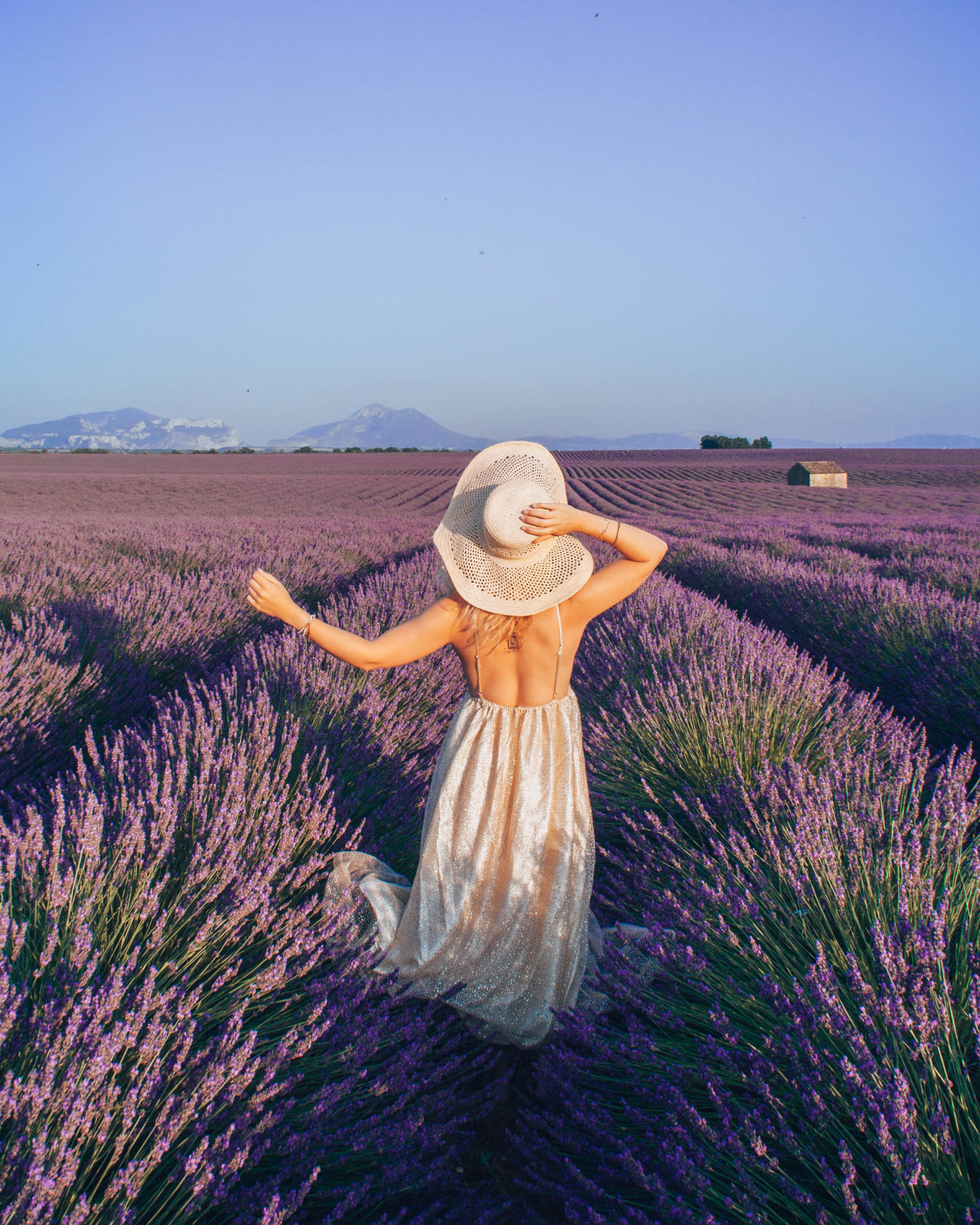 The magical lavender fields of Provence and where to find them