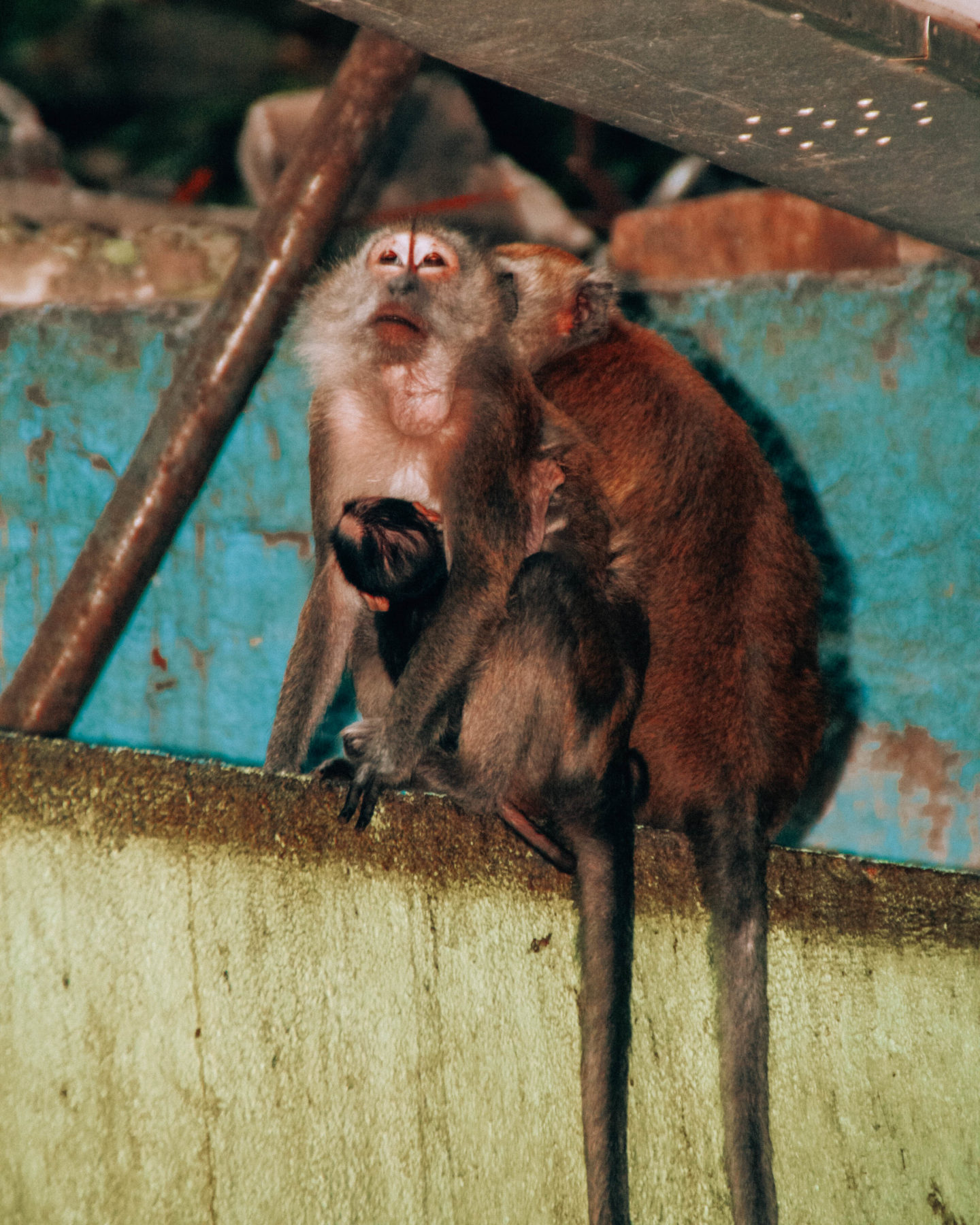 Free monkeys in the Batu Caves
