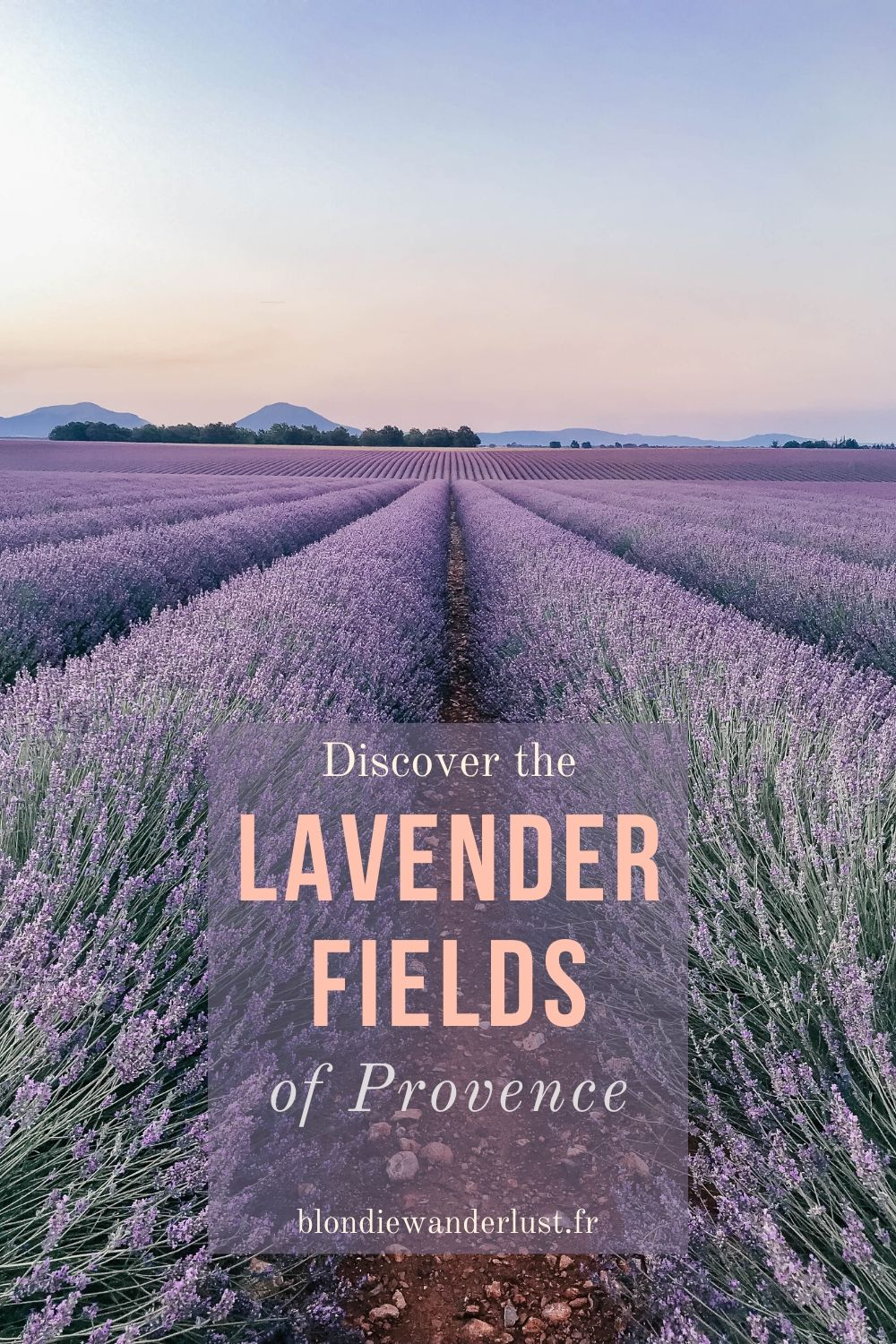 Discover the lavender fields of Provence, the ultimate guide