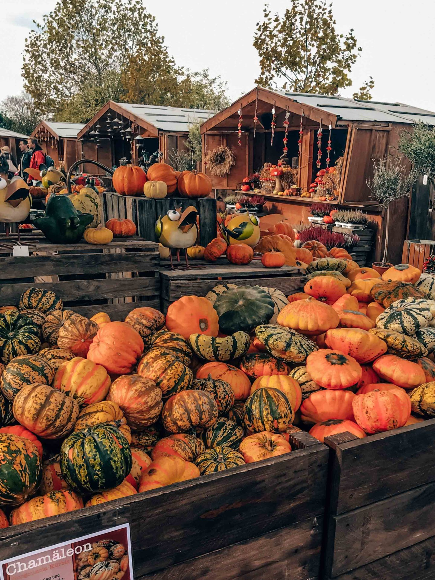 Shopping pumpkins in Gertrudenhof, Germany