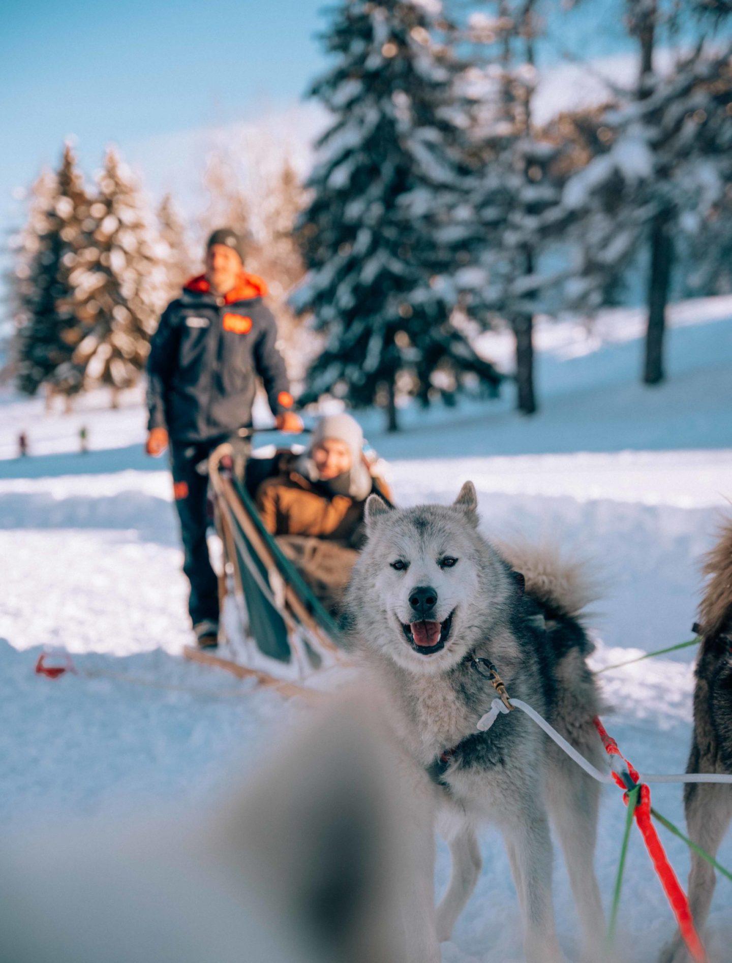 Dog sledding with Evolution 2 Megeve