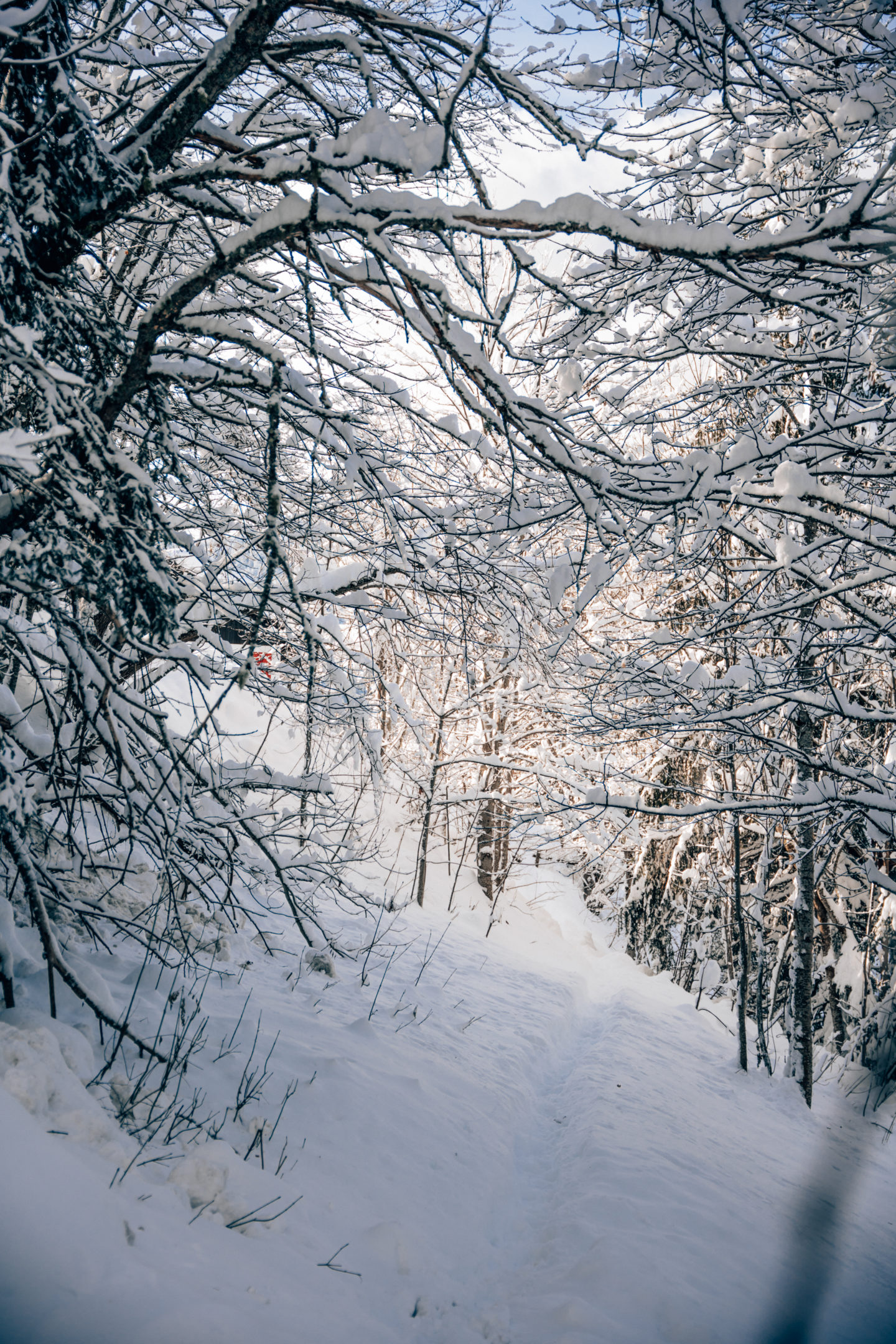 Deep forest and snow in Megeve