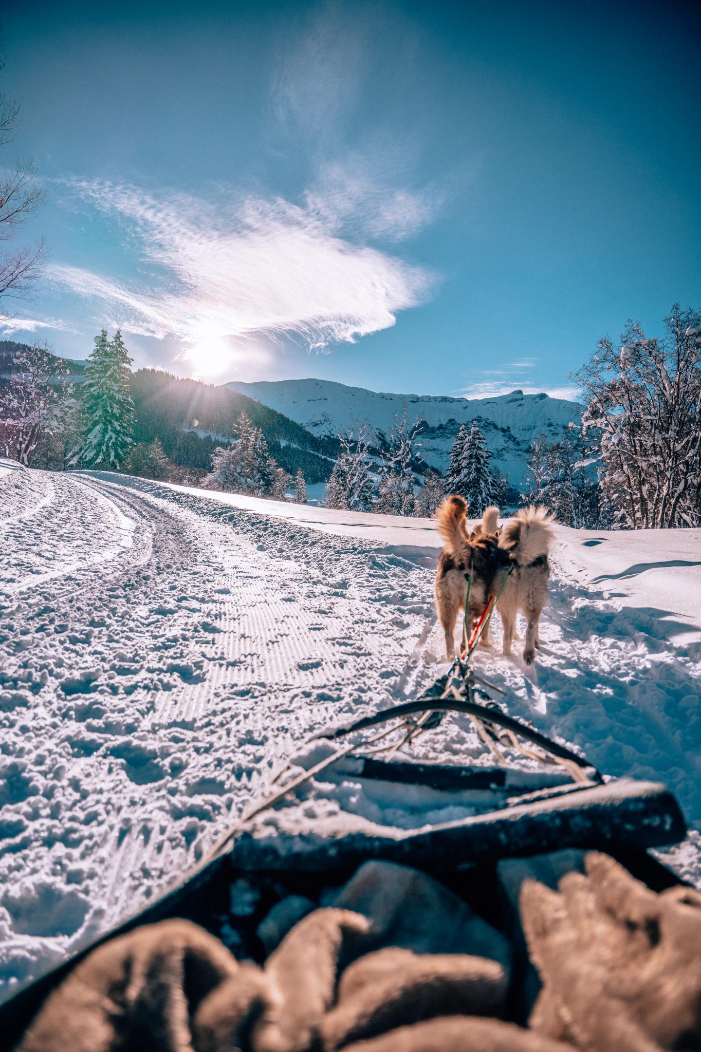 Dog sledding magical views